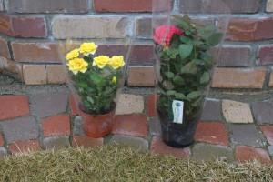④購入した鉢花